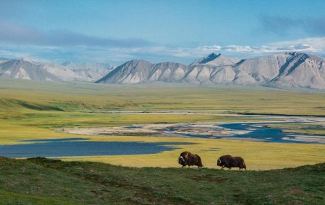 The ANWR Drilling Controversy, Unpacked